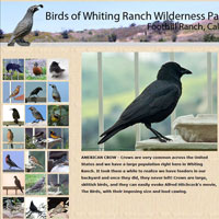 Birds of Whiting Ranch website